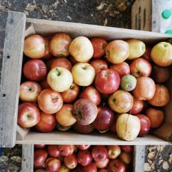 LA Living: Apple Picking